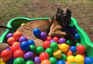 Logan in pool of balls