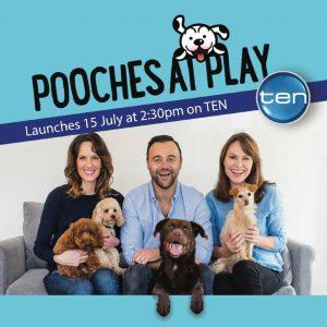 Pooches at Play image